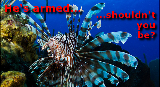 Lionfish are armed, shouldn't you be?